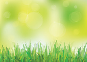 Vector of spring background with green grass.