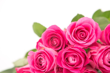 Close up of a beautiful bouquet of pink roses on a white backgro