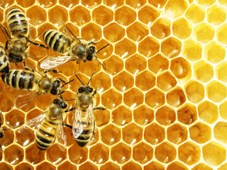 Photo sur Aluminium Bee Close up view of the working bees on honey cells