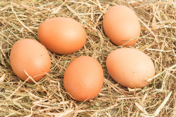 Five eggs nestled in straw