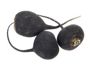 Black Radish, turnip, isolated on white