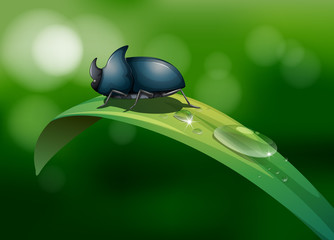 A green leaf with a beetle