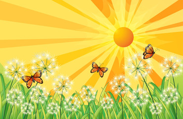 A sunset scenery with butterflies