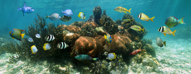 Aluminium Prints Under water Coral reef underwater panorama with colorful tropical fish, Caribbean sea
