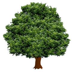 木 植物 地球 環境