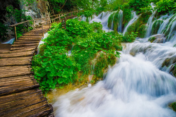 Forest Stream Scenery