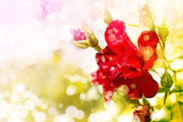 Spring background with a flowers