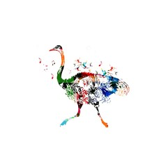 Colorful vector ostrich background with hummingbirds