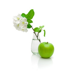 green apple and apple-tree branch with flowers on a white backgr