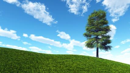 Einsamer Baum im Sommer