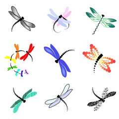 set of images of dragonflies