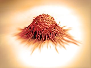 cancer cell / tumor