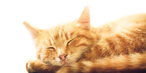Little Red Kitten Sleeping On White Backgound