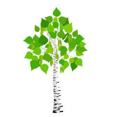 Stylized vector tree birch, vector illustration