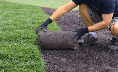 Papiers peints Olive laying sod