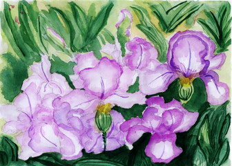 watercolor illustration,The flowers in full bloom