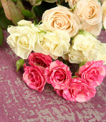 Beautiful colorful roses close-up, on color background