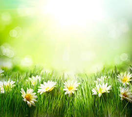 Wall Mural - Spring Meadow with Daisies. Grass and Flowers border