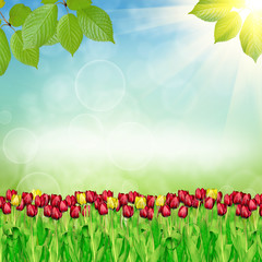 Spring tulips on nature background