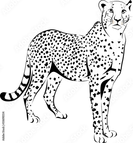 Vector Cheetah Stock Image And Royalty Free Vector Files On Fotolia