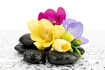 Frezje na kamieniach do masażu