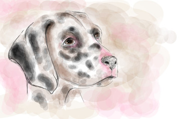 Dalmatian dog aquarelle painting imitation