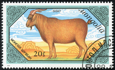 stamp printed by Mongolia, shows Goats