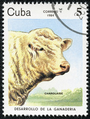 stamp printed by CUBA shows cow