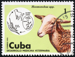 stamp shows Sheep in the theme of Veterinary Medicine