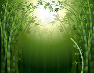 A dark bamboo forest