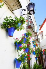 Wall Mural - Flower street