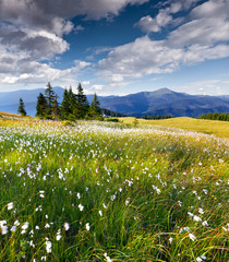 Beautiful summer landscape in the  mountains with a feather gras