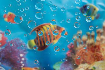 Water drops on an aquarium