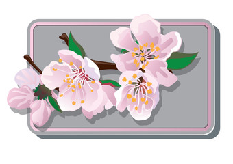 cherry blossoms card