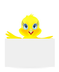 Young chick on a white background