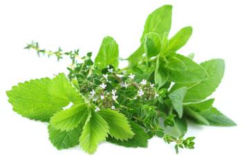 Wall Mural - Fresh green herbs