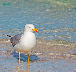 seagull and foreshore
