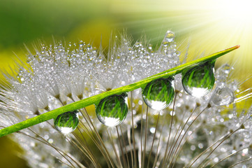 Foto op Plexiglas Paardebloemen en water Fresh grass with dew drops close up