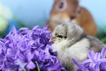 Little Easter Chick