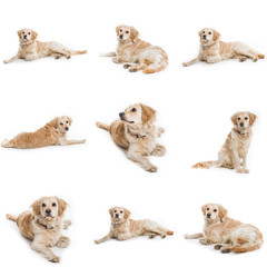 collection of nine cute dog
