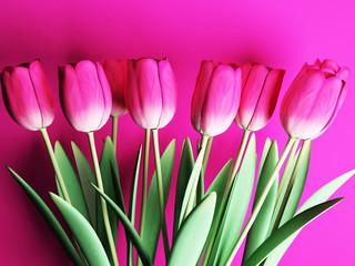 many beautiful tulips