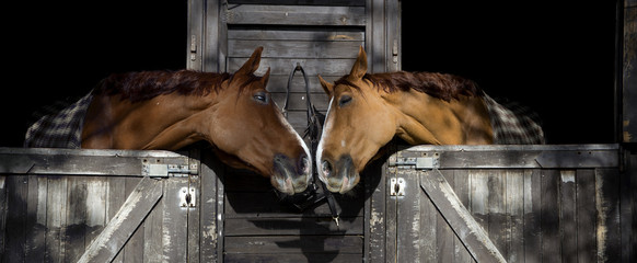 Spoed Foto op Canvas Paarden Horses in love