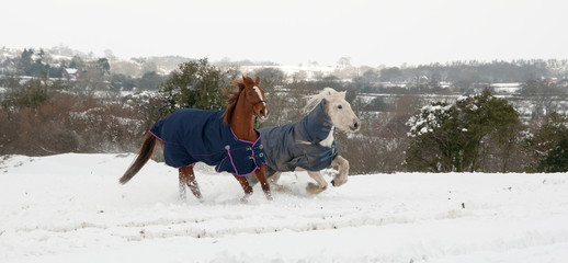 Pair of horses running in the snow