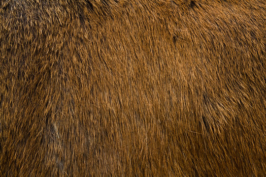 Animal fur texture.