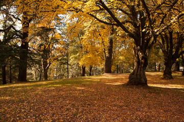 Autumn in Daylesofd