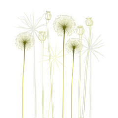 Floral background, dandelion. The meadow in summertime.