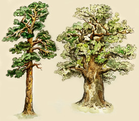 Pine and oak trees, painted in vintage manner