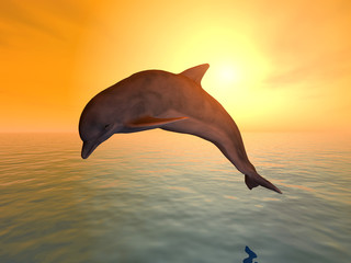 Photo sur Plexiglas Dauphins Jumping Dolphin