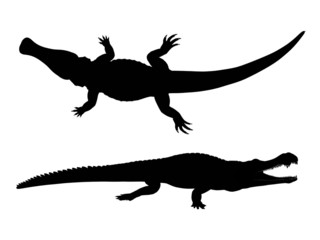 Silhouette of a Crocodile