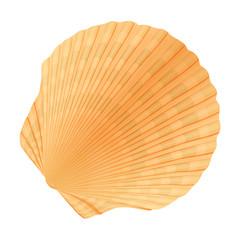 Seashell_c